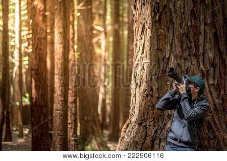 Young male photographer wearing green cap taking photo in Redwood forest (Whakarewarewa Forest) near Rotorua city in North Island, New Zealand