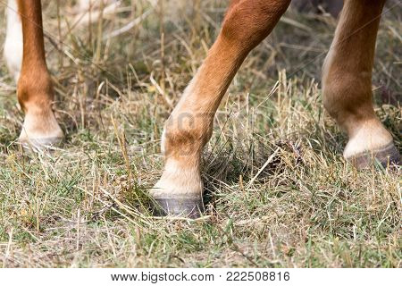 the horse's hoof . In the park in nature