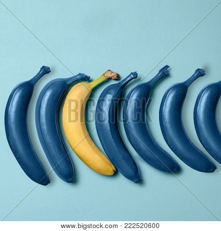 Creativity, creative thinking, ideas concept with blue bananas and one yellow banana on blue background. The concept - not like everyone else or concept difference or individuality
