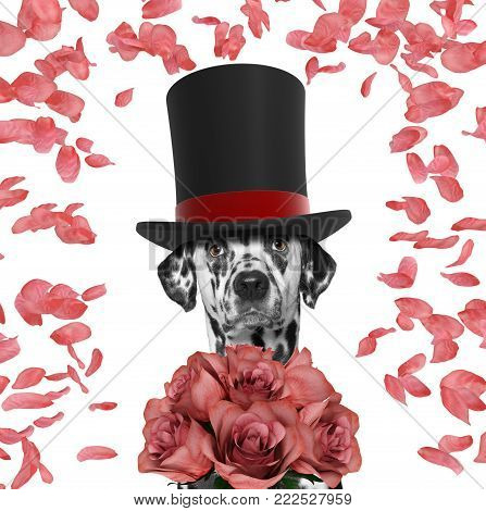Valentines dog in a high hat cylinder with roses -- isolated on white