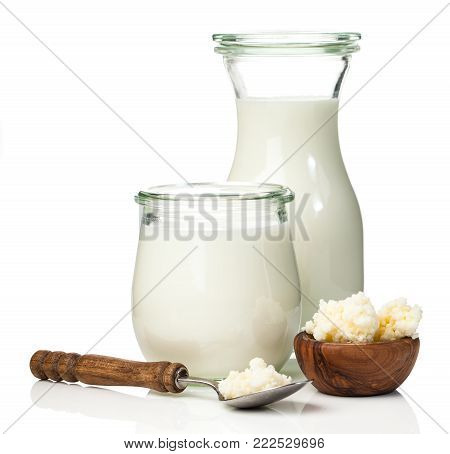 Milk kefir grains. milk kefir, or búlgaros, is a fermented milk drink that originated in the Caucasus Mountains made with kefir