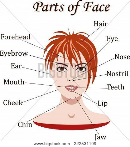 Young Girl. Vocabulary of face parts for lessons. Vector illustration.