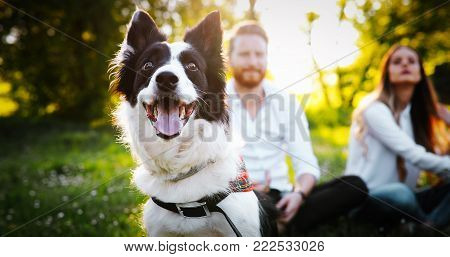 Couple playing with dogs in the park