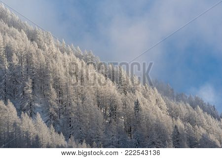Mountain Side Covered In Snowy Pine Trees Against Blue Sky