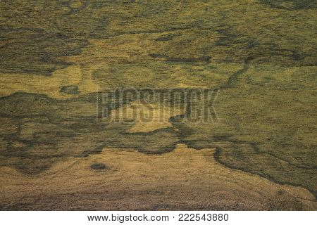 Veneer Zirikot tree. Background is greenish-brown with a slightly yellowish tinge. The texture has a straight-fibrous structure with a glossy, glossy surface. Backdrop wooden.