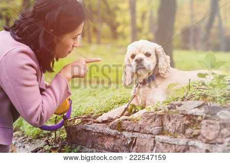 Asian woman training her dog in park. American cocker spaniel lies and looks into the camera. Woman pointing finger at dog.
