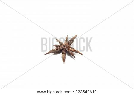 close up of Star anise isolated on white background