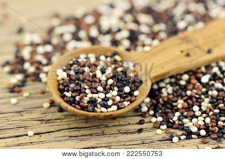 Mixed quinoa (Chenopodium quinoa) seed. Cooked quinoa supplies nutrient content similar to wheat and rice.