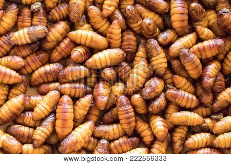 Closed up of brown silk worm prepare for making cocoon background