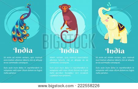 Animal symbols of India on set of posters. Vector illustration of peacock with colourful feathers, monkey with long tail and white elephant on blue