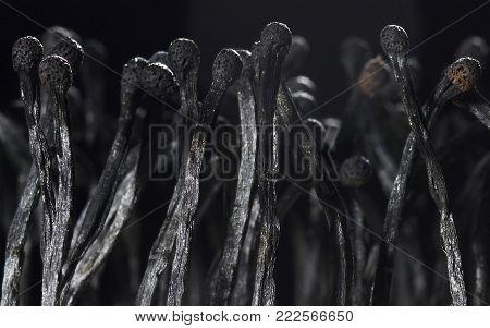 Pile Of Match Sticks, stack of burnt matches. studio shot