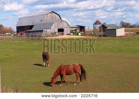 Horses Grazeing W Barn
