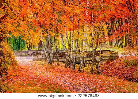 Beautiful Colorful Autumn Leaves . wonderful view. Nature background