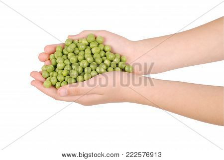 Hands holding green peas. Fresh green peas in the children's hands. Green peas in his hands. A girl holds green peas.