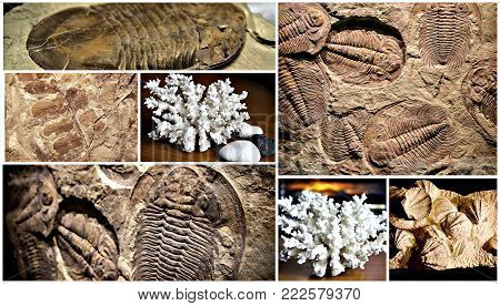 fossil trilobite imprint in the sediment. collage of images of fossils