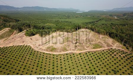 Oil palm plantation, deforestation, rainforest. Aerial photo of environmental damage in Southeast Asia