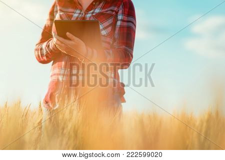 Smart farming, using modern technologies in agriculture. Female agronomist farmer with digital tablet computer in wheat field using apps and internet in agricultural production and crop protection.
