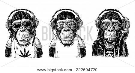 Thre Monkey in headphones. Hipster with dreadlocks, rocker, rastaman. Vintage black engraving illustration for poster. Isolated on white background