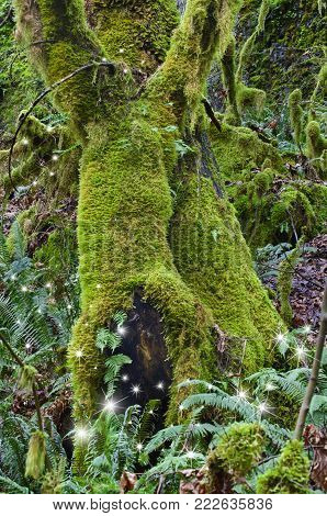 Ancient Mossy trees in forest with fairies