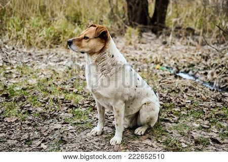 Close-up view of the dog sitting on the ground in the autumn