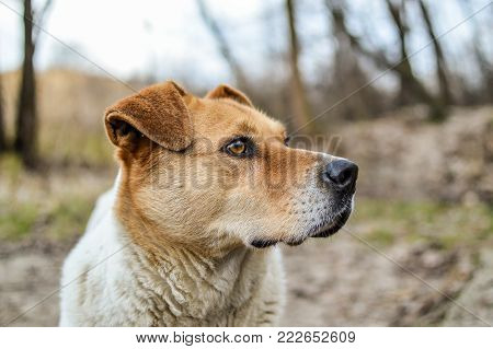 Close-up view of the big stray dog