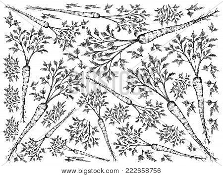 Root and Tuberous Vegetables, Illustration Hand Drawn Sketch of Fresh Hamburg Parsley with Root on Leaves Used for Seasoning in Cooking. Isolated on White Background.