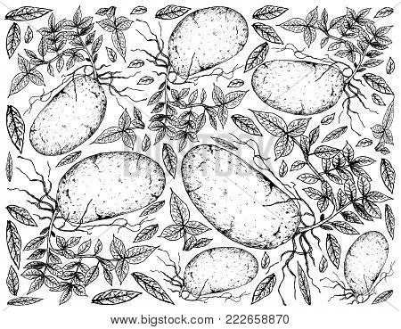 Root and Tuberous Vegetables, Illustration Hand Drawn Sketch of Potatoes Isolated on White Background.