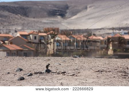 Small squirrel with residential area on the background