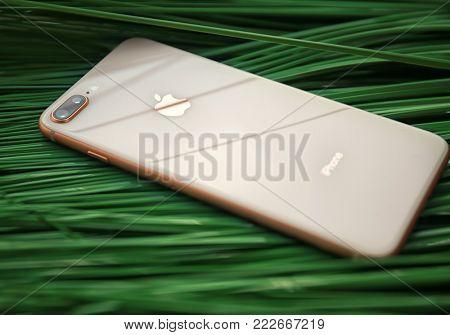 KIEV, UKRAINE - OCTOBER 25, 2017: Modern gold iPhone 8 plus on green leaf