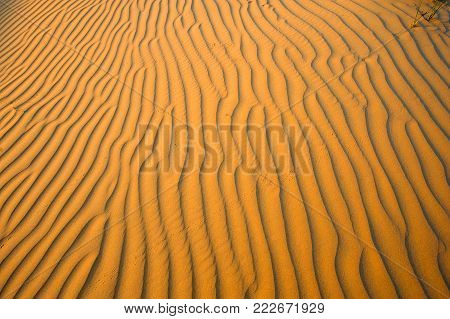 Ripples in the sand in the desert in the United Arab Emirates.