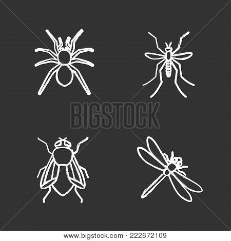 Insects chalk icons set. Spider, dragonfly, housefly, mosquito. Isolated vector chalkboard illustrations