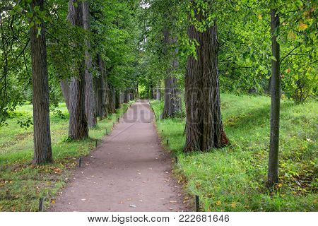 Beautiful avenue of linden trees in the estate of Leo Tolstoy at Yasnaya Polyana, Tula region, Russia