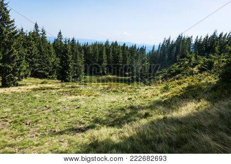 Raven Eye Lake Is Surrounded By Spruce Forest (ukraine, Carpathians, Dragobrat)