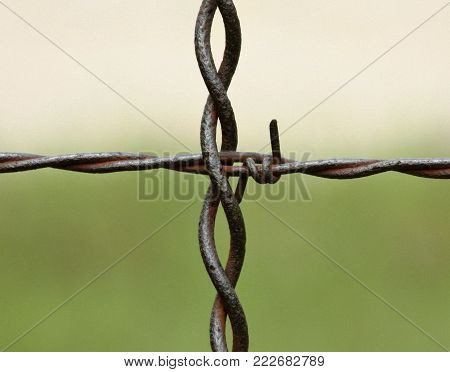 Close-up of a cross section of rusty barbed wire fence on green and gray background.