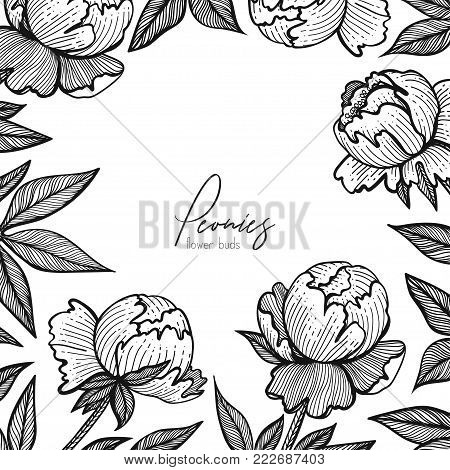 Vector floral frame with peonies. Detailed graphic flowers for your design small boxes, business cards, backgrounds and posts for social media, packaging, labels and tags