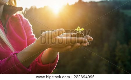 Woman Hands Planting A Seed During Sunny Day In Backyard Garden - Girl Gardening At Sunset In Spring