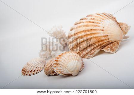 Concep photo ,Seashell on a white wood box