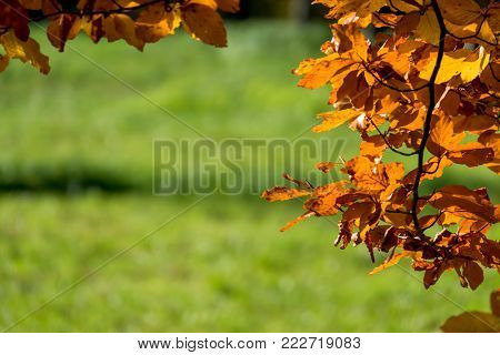 a leaf in the autumn
