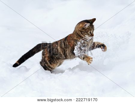 graceful spotted cat funny fun to hunt on white snow in winter garden