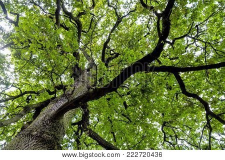 deciduous tree and treetop