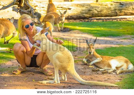 Happy caucasian woman touches a kangaroo outdoor in a park. Female tourist enjoys Australian animals icon of the country. Whiteman, near Perth, Western Australia. Group of kangaroos in the background.