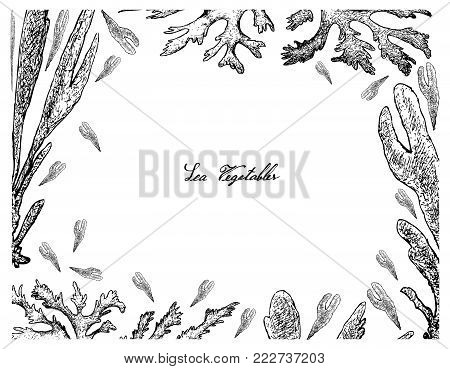 Sea Vegetables, Illustration Frame of Hand Drawn Sketch Dulse, Dillisk or Palmaria Palmata Seaweed Isolated on White Background. High in Calcium, Magnesium and Iodine.