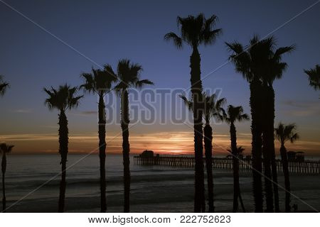 Oceanside Pier and Palm Trees During Sunset