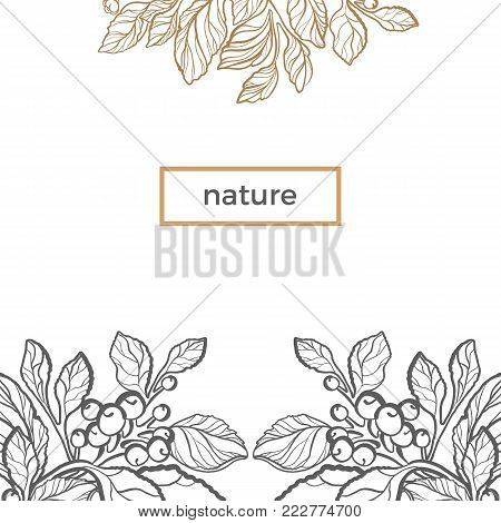 Vector template. Golden mate branch with natural leaf, berry and flower on white background. Organic card. Line art design. Floral sketch. Eco-product. Trendy monochrome illustration. Medicinal herbs