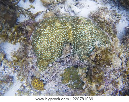 Green coral of tropical seashore underwater photo. Coral reef animal. Warm sea shore nature. Colorful sea fish and coral. Undersea view of marine life. Coral reef landscape. Shallow water snorkeling