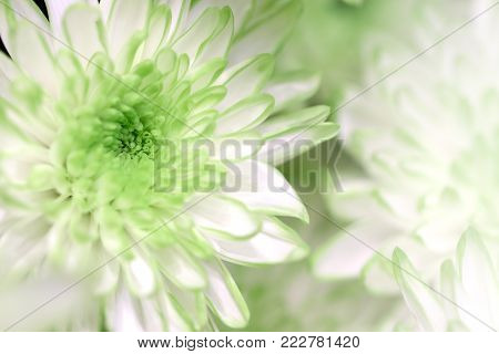 Green/White flowers in soft style for background