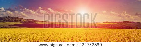 Beautiful, fantastic landscape. Rape Field at sunset, panorama. majestic sunrise. use as background. color in nature. beautiful in nature. serie. creative images