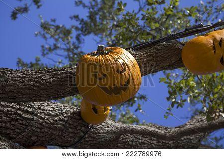 Orlando, Florida, Usa - November 3: Carved Pumpkins For Halloween At Universal Studios.  Taken Novem