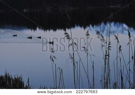 snow mountain and forest reflected in a lake at dawn, peaceful  lake in the dawn