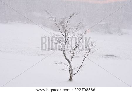 a tree under the snow , a tree under snow storm